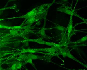 cell-culture-regenerative-medicine